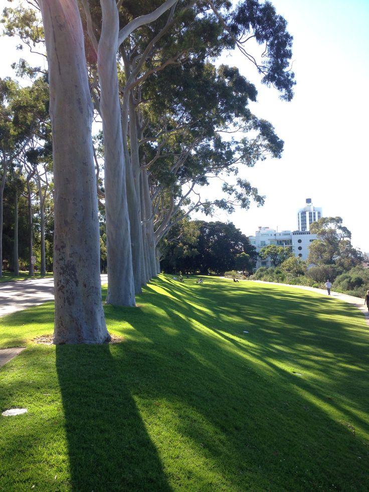 Kings Park. Perth.