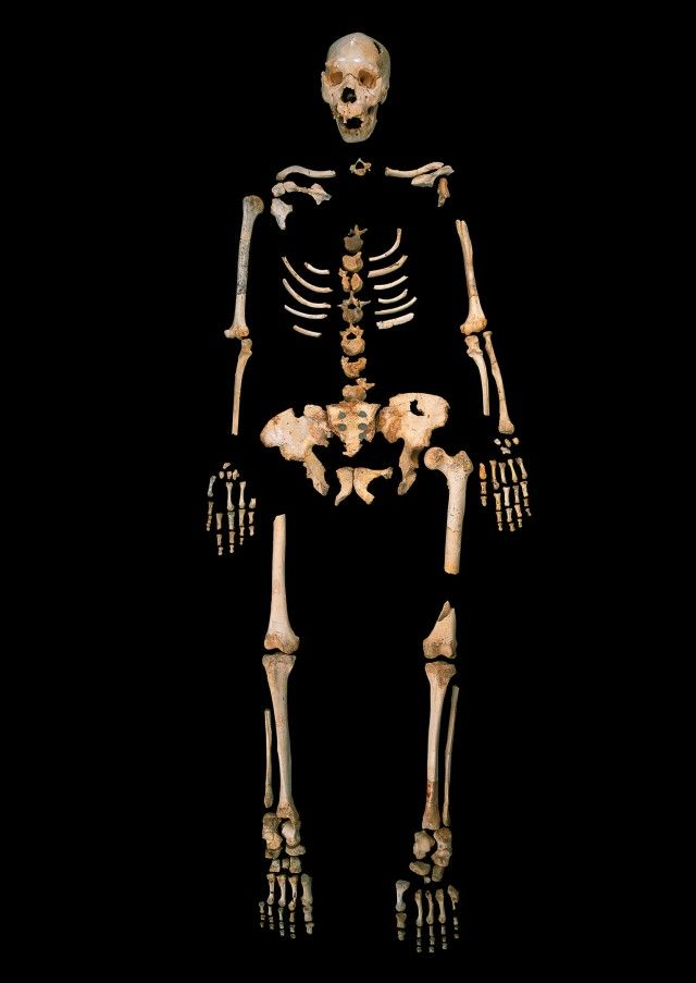 Oldest human DNA sequence yet confuses our picture of pre-modern humans | Ars Technica
