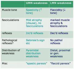 upper motor neuron vs lower motor neuron - Google Search