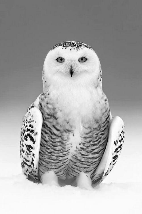 Mejores 77 imágenes de Aves en Pinterest   Pájaros bonitos, Aves ...
