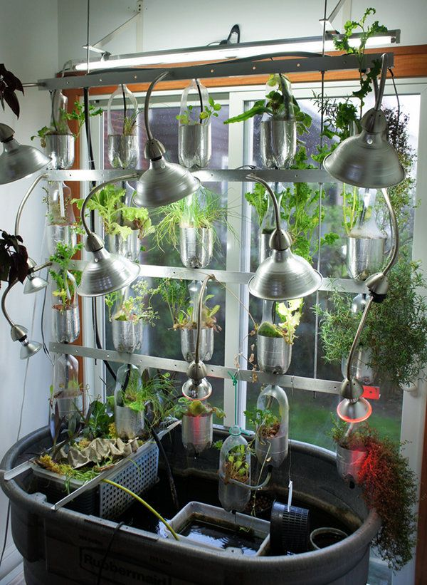 86 best aquaponic gardening images on pinterest for Fish tank hydroponic garden