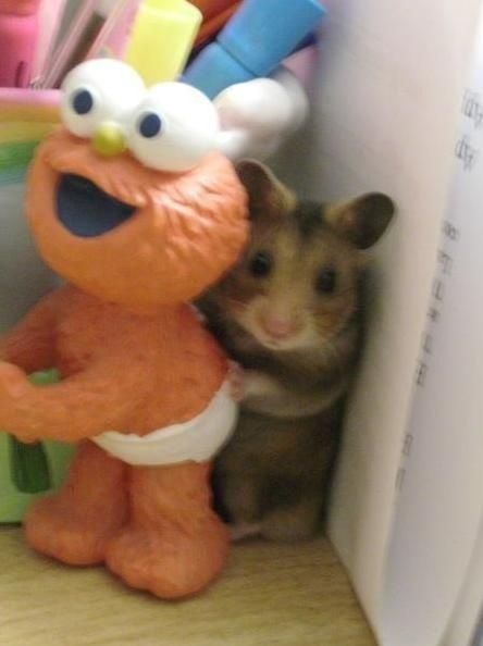 When my sister and I were young, our hamsters would break out of their cages often....And this is how we expected to find them. They were such stinkers!! One of them though, we never found....I think she's still playing hide and seek.. ;)