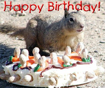 422aef28f7b4283e6e434ceb3012a972 your birthday birthday cards 27 best happy birthday cards images on pinterest happy birthday,Squirrel Birthday Meme