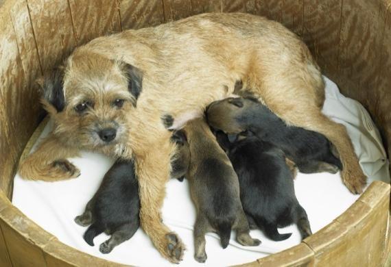Best 20+ Dog Birth Ideas On Pinterest | Pregnant Dog, Best Pet