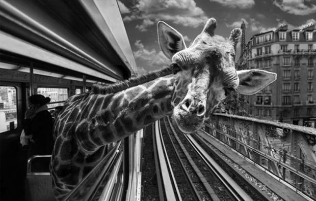 Des animaux exotiques dans le métro