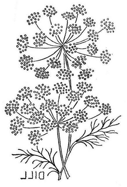 Wb_herb6 | Schablone Stickerei Und Zeichnen