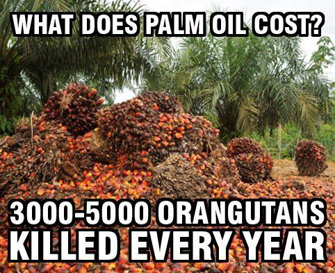 "Palm oil kills 3000-5000 Orangutans every year. Please be part of the solution: STOP buying food & ""beauty"" products with palm oil, or palm oil derivitives! Their lives depend on it."