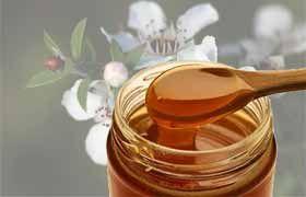Le roi des miels s'appelle Manuka et provient de Nouvelle Zélande ( Depuis des siècles le miel est utilisé pour ses propriétés antibactériennes et cicatrisantes pour traiter des blessures ou brûlures ).