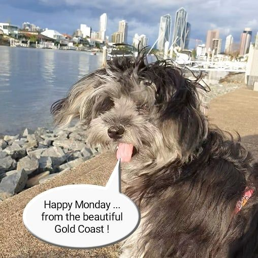 Forex Trading Strategies Maltipoo Gold Coast Happy Monday