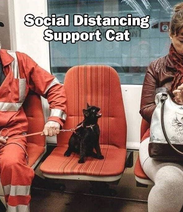 Social Distancing Done Properly Funny Animal Memes Funny Animal Jokes Cute Funny Animals