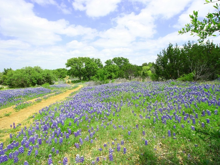 "Via CultureMap Austin! An article on Texas Land Conservancy's Pike Davis Ranch project, ""Protecting Texas for generations: The Texas Land Conservancy and centennial ranches"""