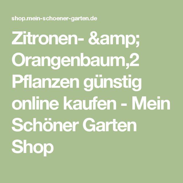 Zitronen- & Orangenbaum,2 Pflanzen günstig online kaufen - Mein Schöner Garten Shop