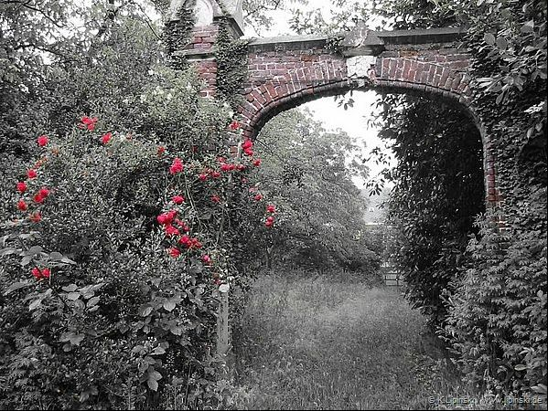 Archway with wild roses