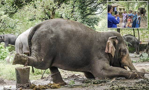 Poor creatures! Unbelievable this still happens in 21 century - The terrible plight of Indian elephants.