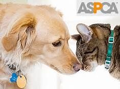 "From The ASPCA: Laws relating to animals can vary widely from state to state. Once you've clicked on YOUR STATE from the menu below, a new webpage will open where you will find the state's different categories of animal laws organized in a chart. Find animal cruelty laws by clicking on the link next to the box that says ""Consolidated Cruelty Statutes."" http://www.aspca.org/fight-cruelty/advocacy-center/state-animal-cruelty-laws"