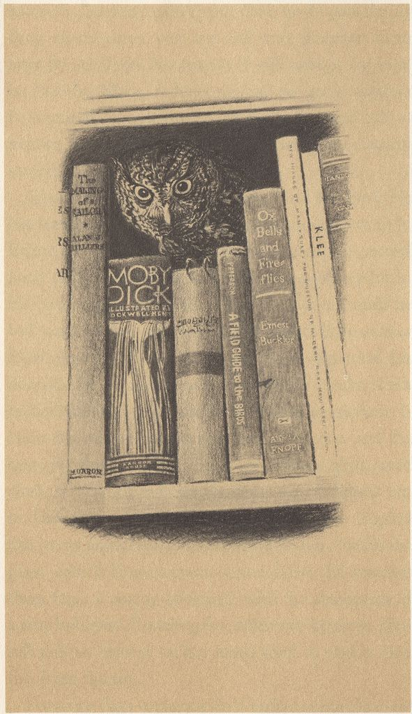 Walter Richards Drawing For The Book Owl Written By William Service