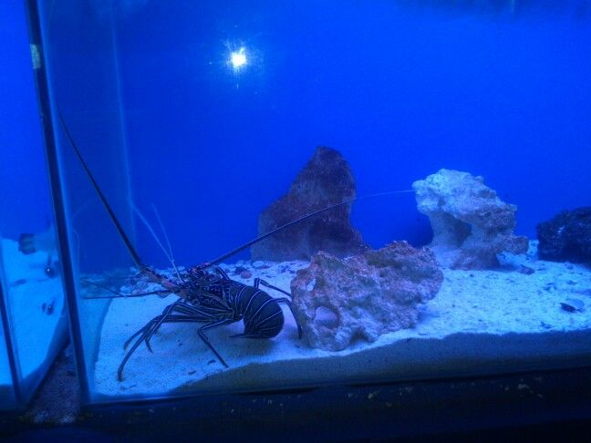 Aquatic wonder