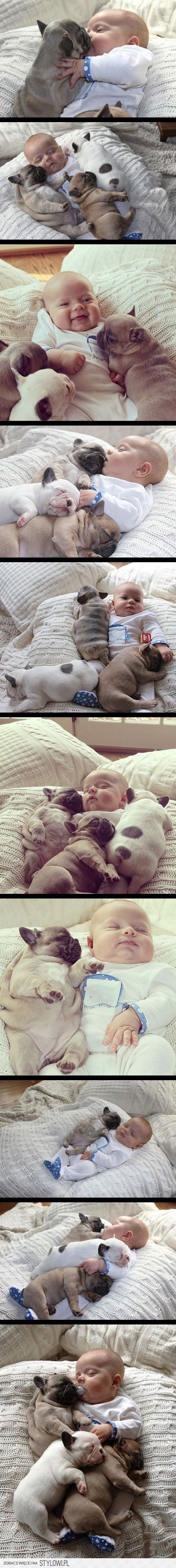Baby And Three Puppy Dogs Fantastic