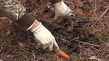 Pro-Pointer Waterproof Metal Detector Lets You Treasure Hunt in Water or Wet Soils