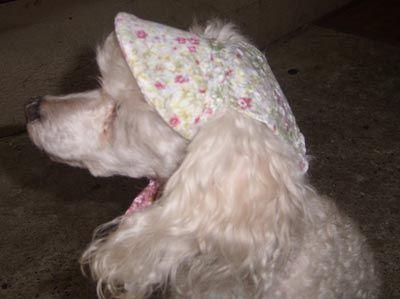 Casquette pour chien , Patron couture gratuit - Loisirs créatifs
