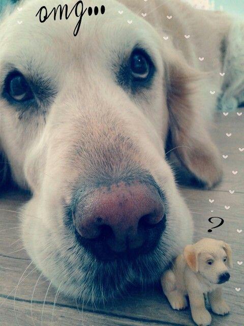My dog Dionne. .♡