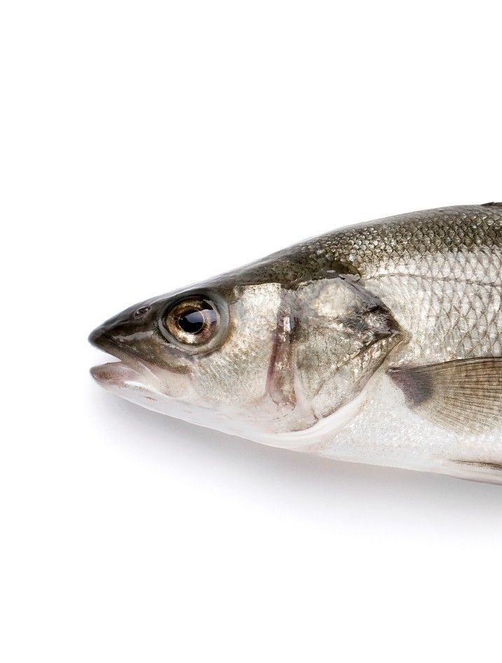 Fresh Branzino Whole Fish