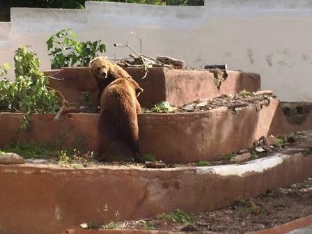Geppy e Lela i due orsi bruni arrivati da Zurigo allo Zoo di Napoli