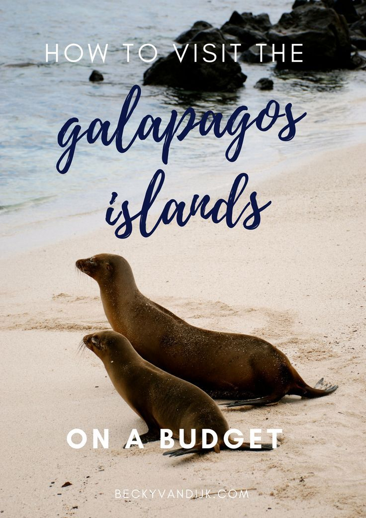 A Guide To Visiting The Galapagos On A Budget - Visiting the Galapagos islands was on my bucketlist for some time, but the expensive cruises options available placed it out of reach. Whilst travelling in South America we met a number of backpackers and travellers who had explored the Galapagos without booking the costly cruise. So we decided to research a little more… BeckyvanDijk.com