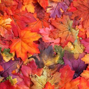 """Képtalálat a következőre: """"őszi színek"""""""