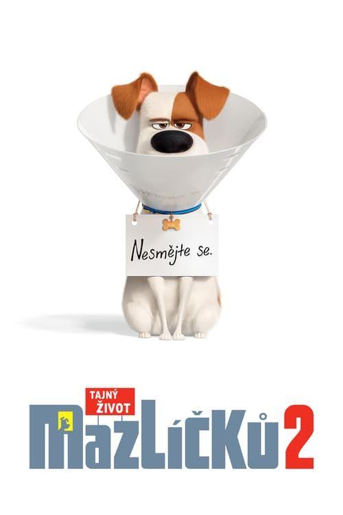 Ver The Secret Life Of Pets 2 Pelicula Completa En Espanol Latino