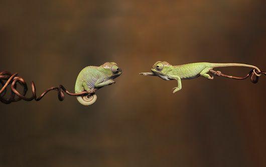 Le straordinarie foto di 10 baby camaleonti