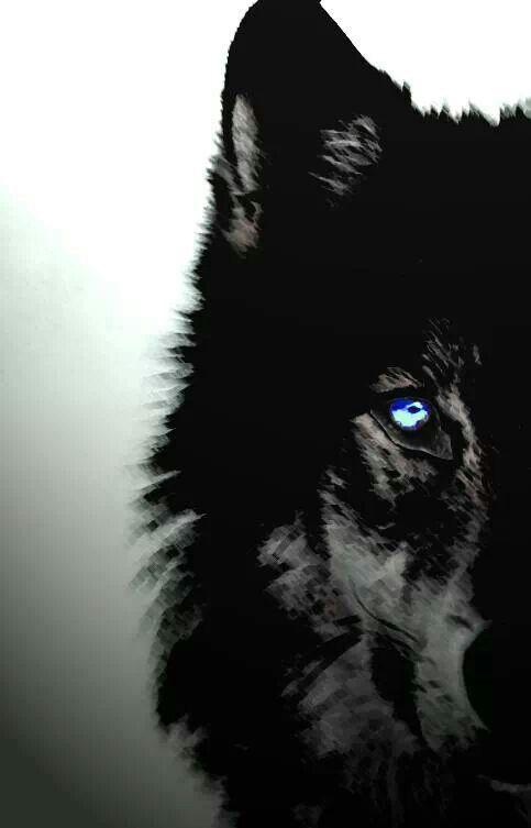 28 Best Wolves Images On Pinterest