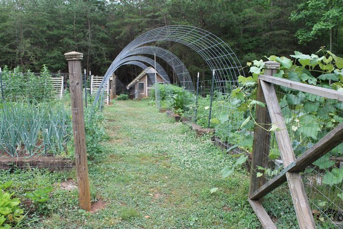 Cattle Panel Arched Support Garden Trellis Cattle Panel Arched