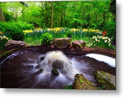 Fresh Stream. Keukenhof Botanical Garden. Netherlands Metal Print by Jenny Rainbow.  All metal prints are professionally printed, packaged, and shipped within 3 - 4 business days and delivered ready-to-hang on your wall. Choose from multiple sizes and mounting options.