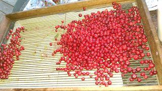 Frøy: Sukker -  gjær – plommer – pærer og epler en gruso...
