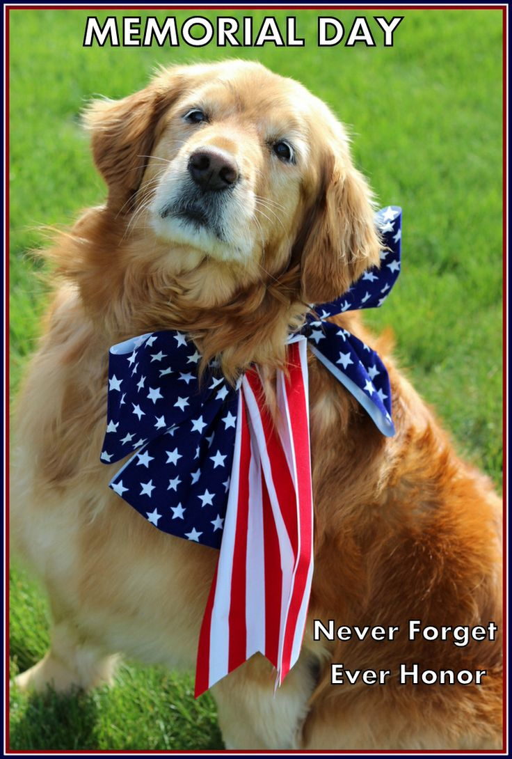 Memorial Day. Golden Retriever Rescue in OH Golden
