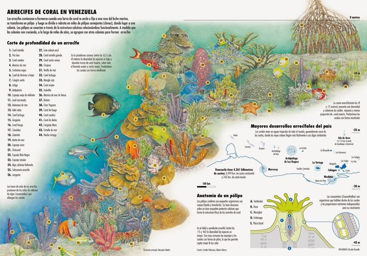 Coral Reef In Venezuela Sea Life Pinterest Coral Reefs And