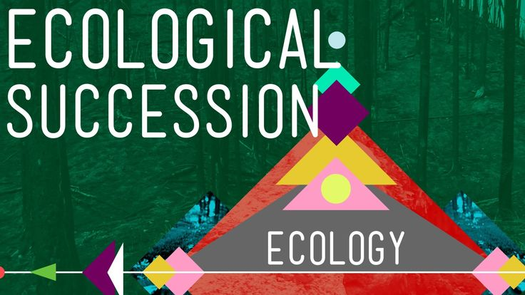Ecological Succession: Change is Good - Crash Course Ecology #6 In the world of ecology, the only constant is change - but change can be good. Today Hank explains ecological succession and how ecological communities change over time to become beautiful, biodiverse mosaics.