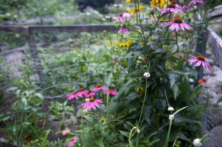 Garden Visit: A Cook's Garden in Upstate New York: Gardenista