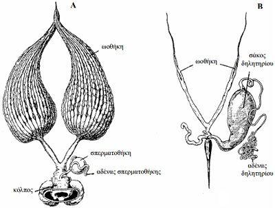 anatomia-tis-melissas-1