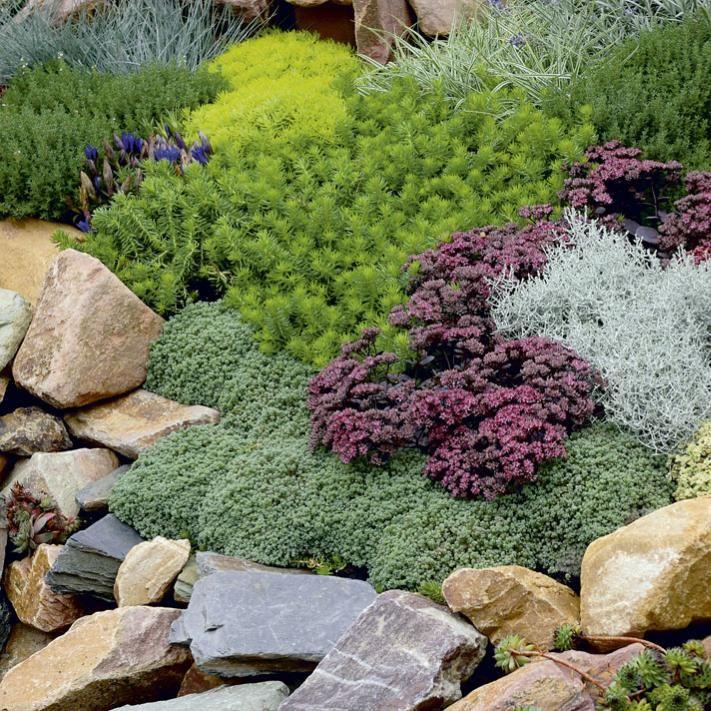 Simple Bodendecker auf Steinen