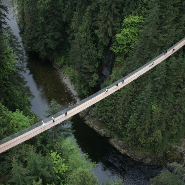 Pont suspendu de Capilano Colombie Britannique  Canada