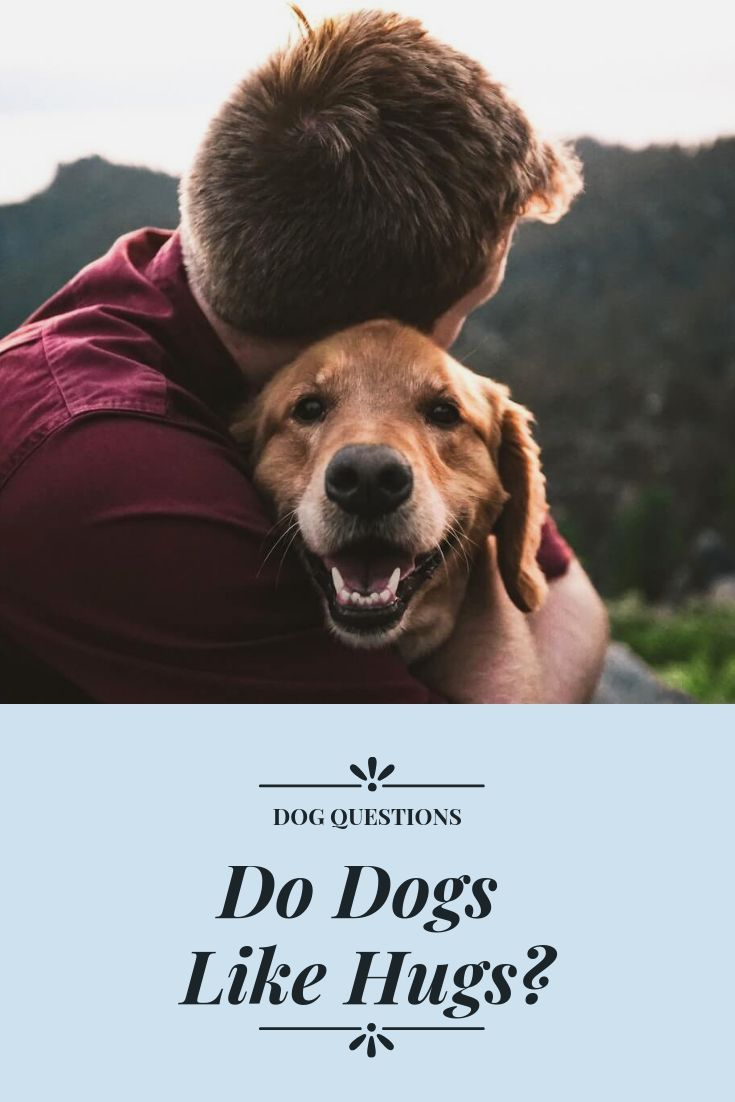 Do Dogs Like Hugs With Images Dogs Animal Hospital Pets