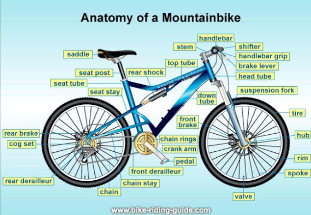 Mountain bike anatomy
