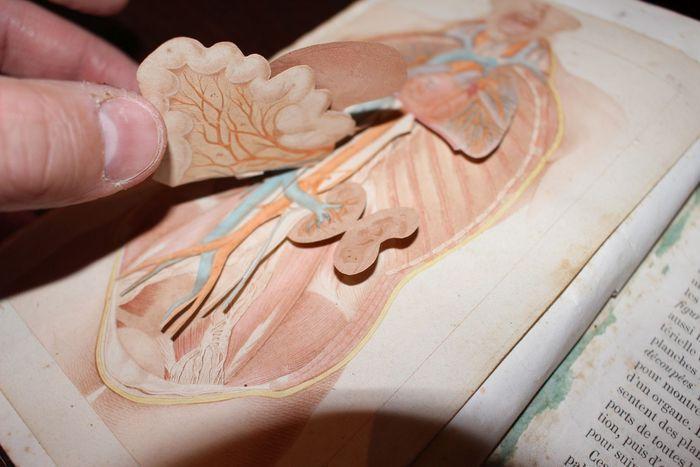 E. Coste - Manuel de Dissection ou éléments d'anatomie - 1847  E - Coste - Manuel de Dissection ou éléments d'anatomie général beschrijvende et topographique - Parijs Baillière 1847 - Half percaline octavo - XI-723 pp.Eerste editie van dit boek blijkbaar zonder plaat gebonden rond 1850 de eigenaar op het moment ingevoegd 9 platen op 7 bladeren namelijk-een plaat op papier (foto 7)-8 platen (6 inclusief 2 dubbelzijdige bladeren) met verklarende specificaties van deze platen (foto 5). Op deze…