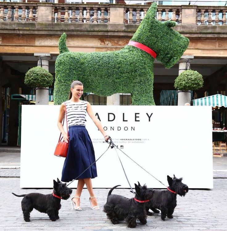 4257 best scotties images on pinterest scottie dogs scottish to celebrate the re launch of radleys flagship store in covent garden millington associates created a giant topiary scottie dog solutioingenieria