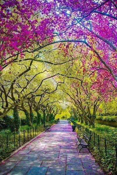 Central Park New York in Spring