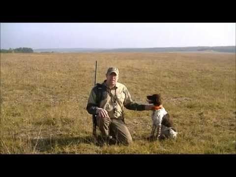 Av köpeği eğitimi (Ses,Aport,ferma...) & Hunting Dog Training - http://www.doggietalent.com/posts/av-kopegi-egitimi-sesaportferma-hunting-dog-training/
