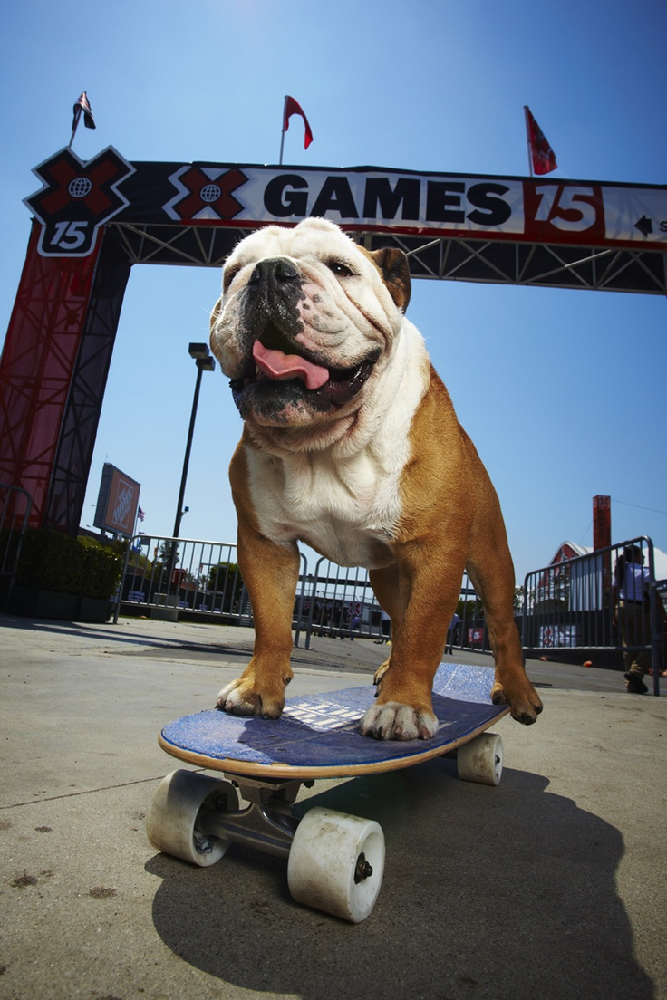 Tillman the English Bulldog covered a 100m stretch of level car park in 19.678 seconds in California, USA, on 30 July 2009.    Audiences at the Wyvern Theatre, Swindon, can join the Official Guinness World Records Adjudicator & team of presenters live on stage on Tue 2 April 2013. Guinness World Records Officially Amazing Science Live! invites you to unleash your hidden talents, celebrate the talents of others & potentially leave the show a world record-breaker! http://wyverntheatre.org.uk…