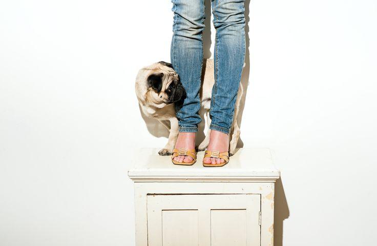 Krémové topánky od Lagerfelda s hranatými podpätkami a mopslík MárioPuco * Vintage Rich Bitch